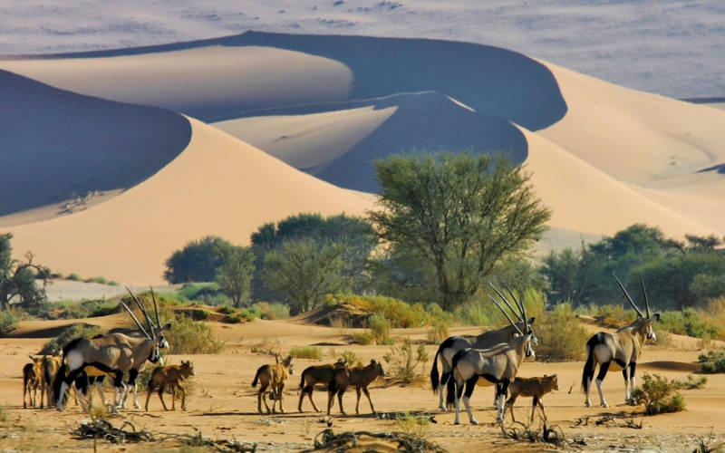 Kuoni, Namibia